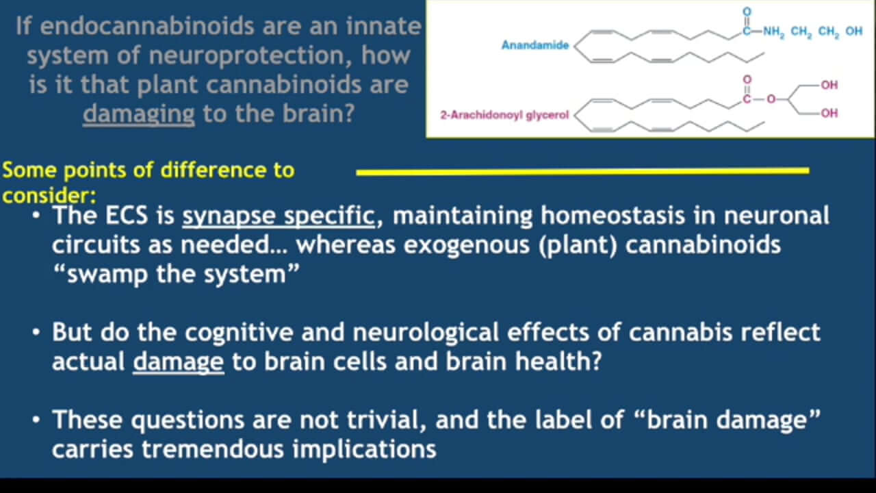 Cannabis and the Brain: Neuroprotection vs Toxicity