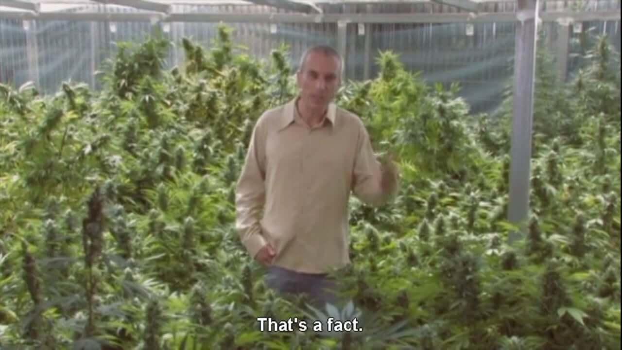 Prescribed Grass